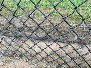 Snake Snare by Eve's Revenge at J&N Feed in Graham, Texas.