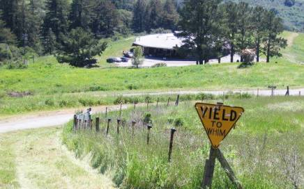 Yield to Whim, Djerassi