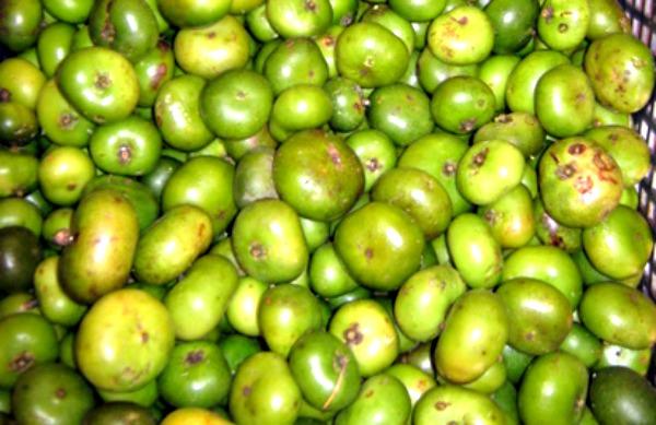 batuan-fruits
