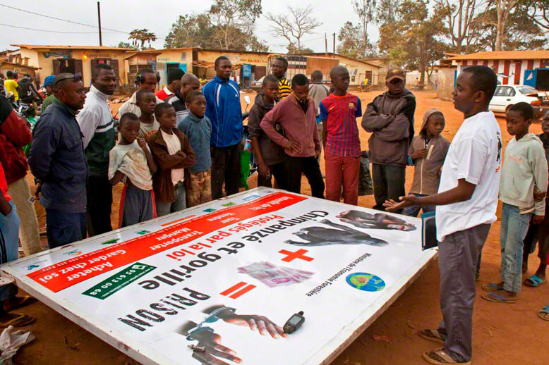 Thanks to support from the European Association of Zoos and Aquaria (EAZA), the Jane Goodall Institute-Congo has erected a series of billboards across the country to educate the public about endangered great apes and the need to protect them and their habitat. Here, JGI staff member Achille explains the billboard to villagers in Sibiti