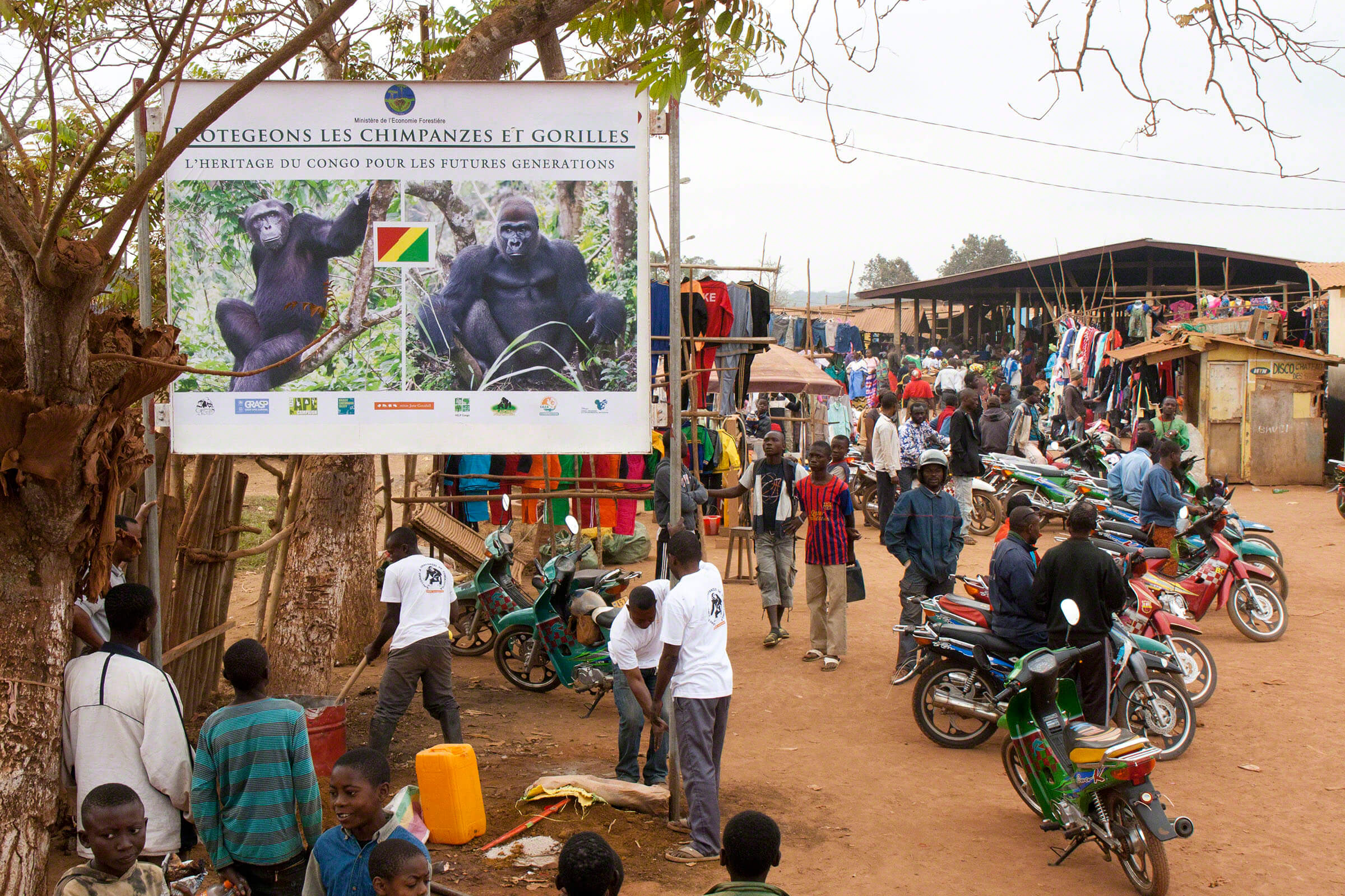 Thanks to support from the European Association of Zoos and Aquaria (EAZA), the Jane Goodall Institute-Congo has erected a series of billboards across the country to educate the public about endangered great apes and the need to protect them and their habitat. This billboard was erected in theSibiti village