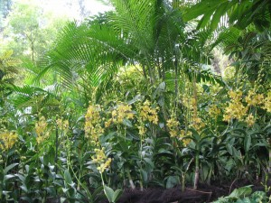yellow orchids/palms