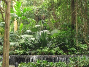 waterfall and tall tropical planting at entrance to main path