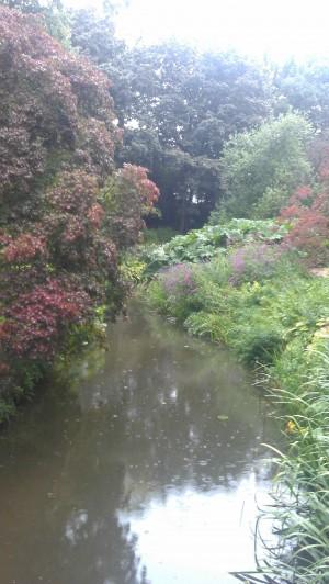 Wild garden overall view