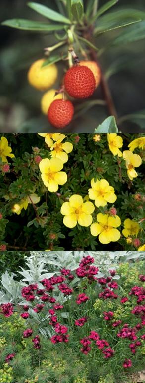 3 Mediterranean plants