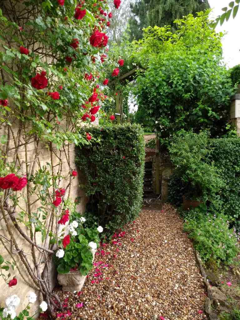 Red climbing rose up stone house wall