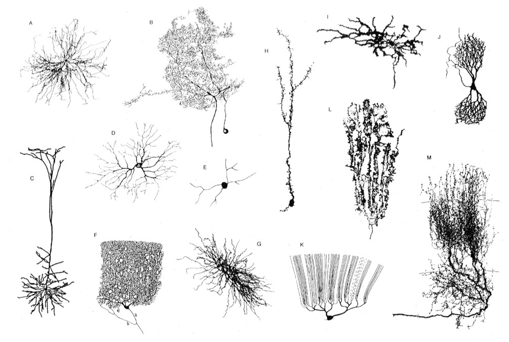 Cellular Diversity In The Hippocampus Janelia Research