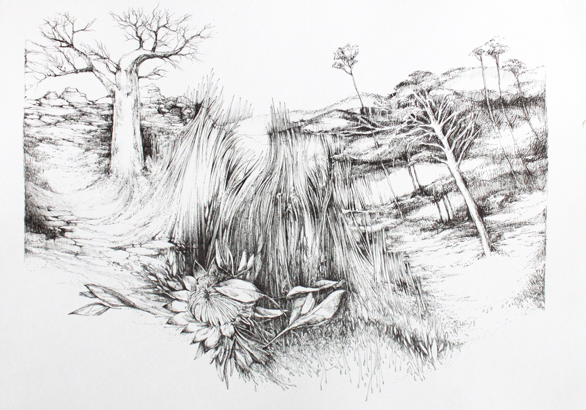 Home of the Protea, Janet Botes, Ink on art paper, 42 x 29.5 cm (unframed), 2015