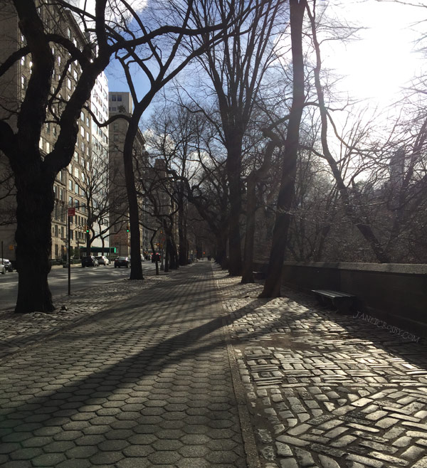 Walk Along 5th Avenue in Winter