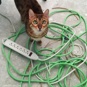 Quincy and the cords - Janet Crosby