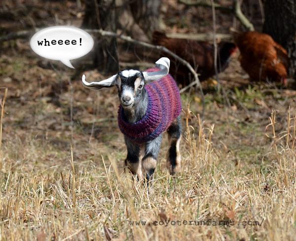 Baby Goat Coat