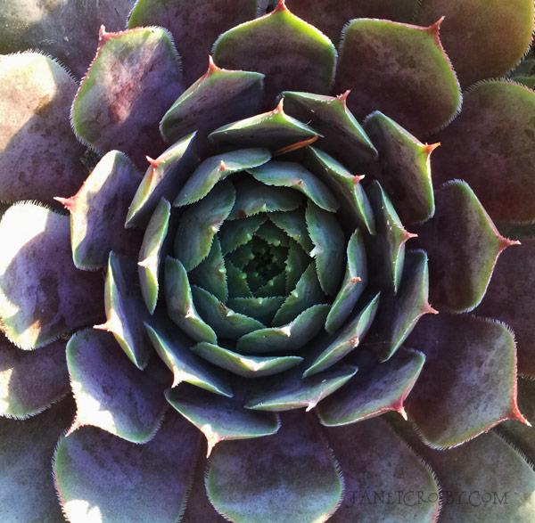 My garden plant