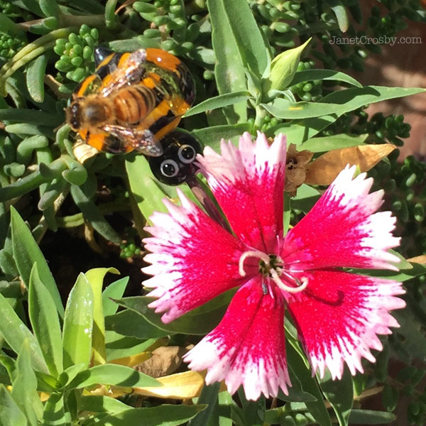 Real bee on a glass bee in my garden