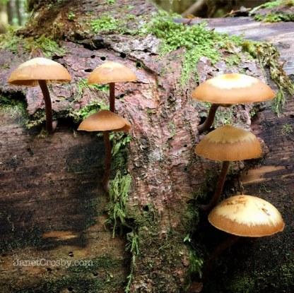 Forest mushroom - Janet Crosby