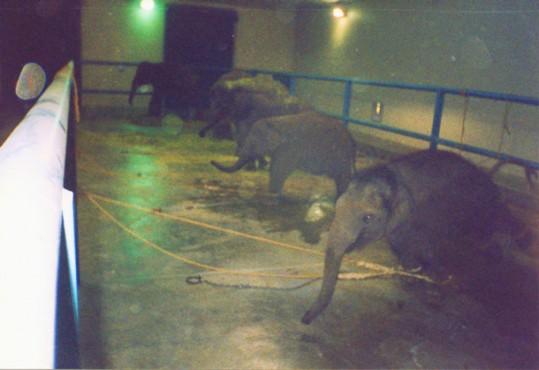 cec_baby_elephants