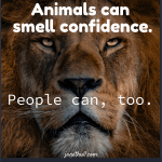 a meme with a lion for confidence