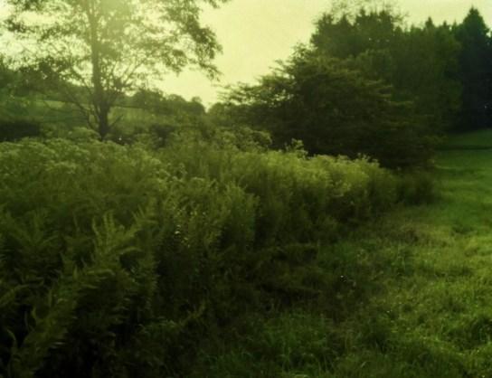 Treestreadwell