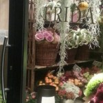 Flower shop, Ferrara