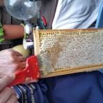 Extracting the honey