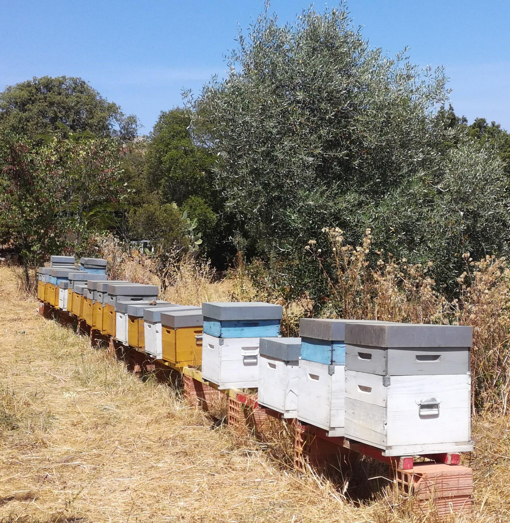 Beehives, Sardinia