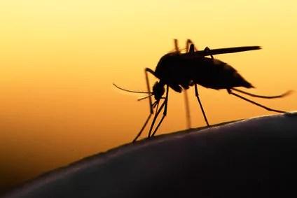Pflichten: Von Mücken und Schmeissfliegen via @psychothherapie