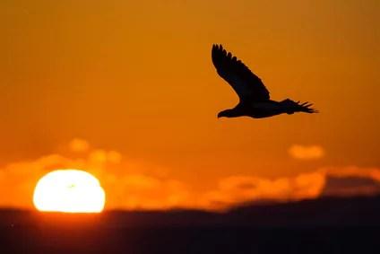 Dissoziation als Mittel zur kreativen Problemlösung. Werden Sie der Adler. #psychotHHerapie via @psychothherapie