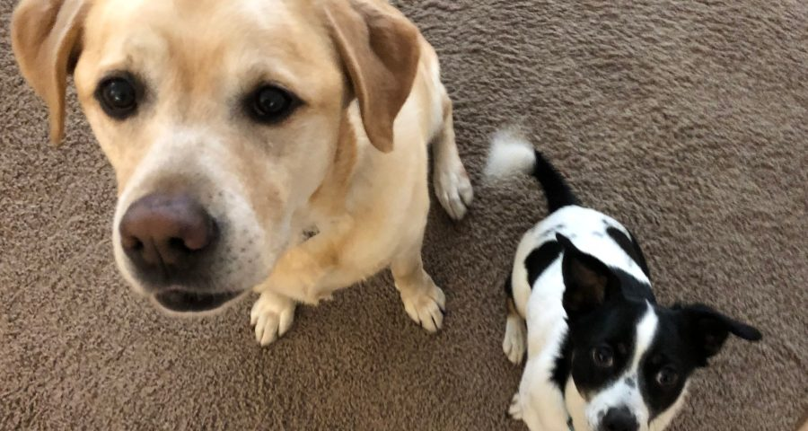 Hunde Lucky und Schröder - Jan Göritz - Heilpraktiker für Psychotherapie und Psychologischer Berater in Hamburg