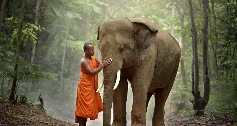 An der Kette - Elefant mit Mönch - Jan Göritz - Heilpraktiker für Psychotherapie und Psychologischer Berater in Hamburg