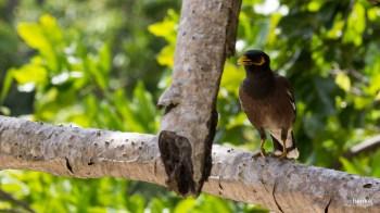 Fauna der Inselwelt