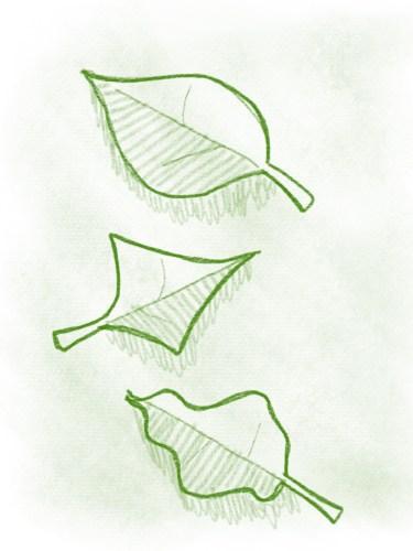 Blätter zeichnen - so geht's ganz fix