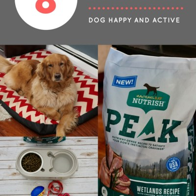 8 Must Haves To Keep Your Dog Healthy and Active