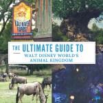 The Ultimate Guide to Walt Disney World's Animal Kingdom