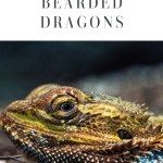 5 Tips to Care for Bearded Dragon