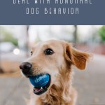Understanding Abnormal Behavior in Dogs and How to Deal with Them
