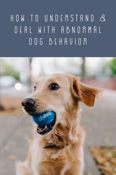 Abnormal Dog Behavior