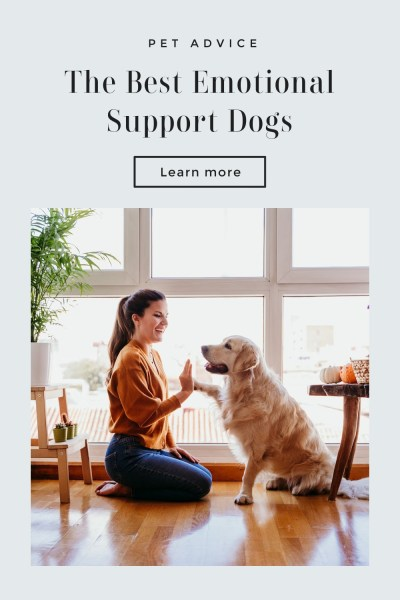 Best Emotional Support Dogs