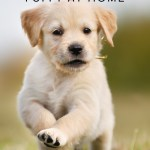 Top Tips for Settling Your New Puppy into Your Home