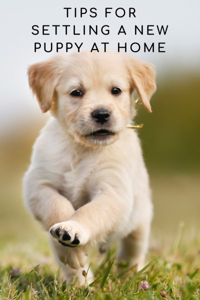 New Puppy At Home Tips