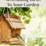 The Perks Of Welcoming Birds To Your Garden