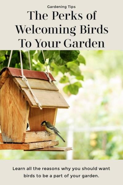 Welcoming Birds To Your Garden Tips