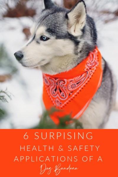 Dog Bandana Tips