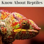 Everything You Need to Know About Getting a Reptile for Your Family's Pet