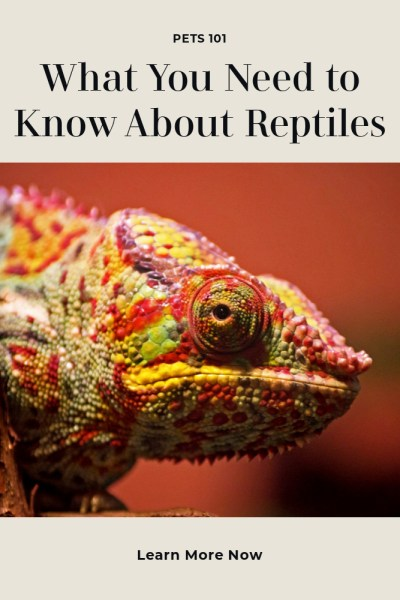 Reptiles For Pets