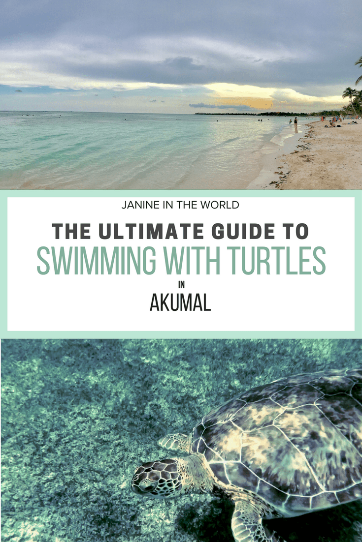 Akumal, Mexico is an incredible spot to go swimming with turtles and an absolute must-do for visitors to the Riviera Maya. Read this guide before you go.