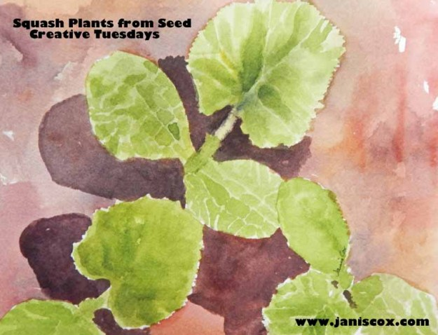 plants squash  copy