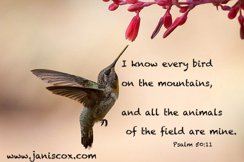Hummingbird - Psalm 50:11