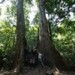 National park Cuc Phuong