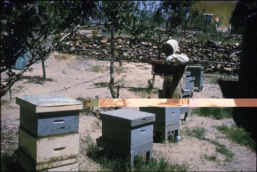 famous honey of Taif popular thoughout the Arabian Peninsula.