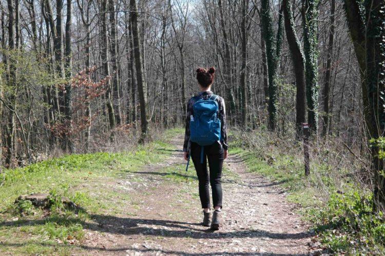Wandern Bad Iburg Freedenblüte