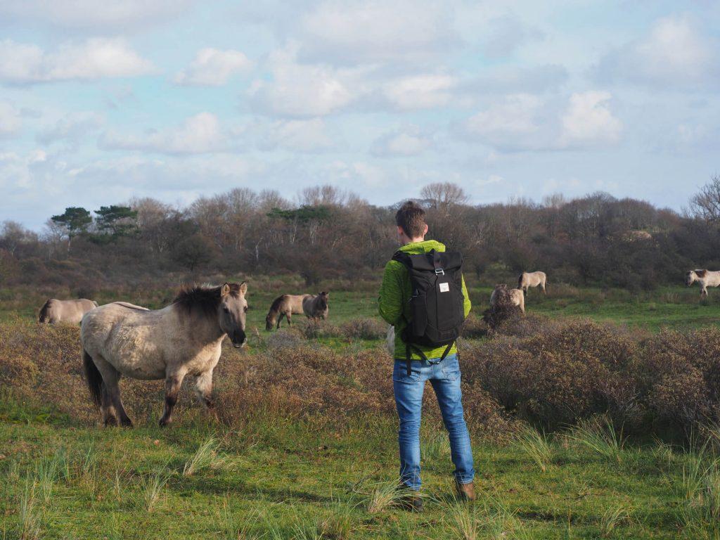 Wandelen met de rugzak Osprey Archeon 25 in Nationaal Park Zuid-Kennemerland